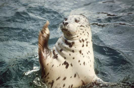 Seals Dislike Cruise Ships [LiveScience 2006-03-29]; Image ONLY