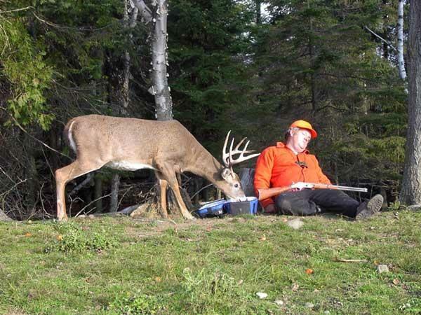 Deer Hunter.jpg