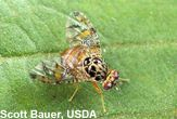 Bugs Worth $57 Billion [LiveScience 2006-04-03]; Image ONLY