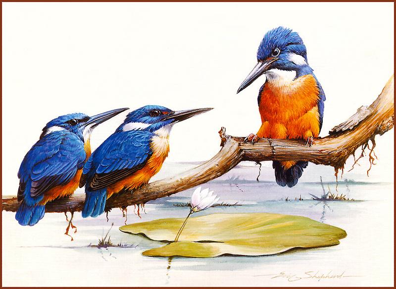 Premise Indicator Words: [Eric Shepherd's Beautiful Australian Birds Calendar 2002