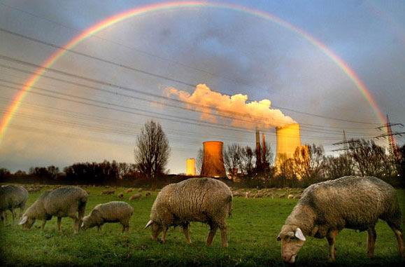 Rainbow Sheep; Image ONLY