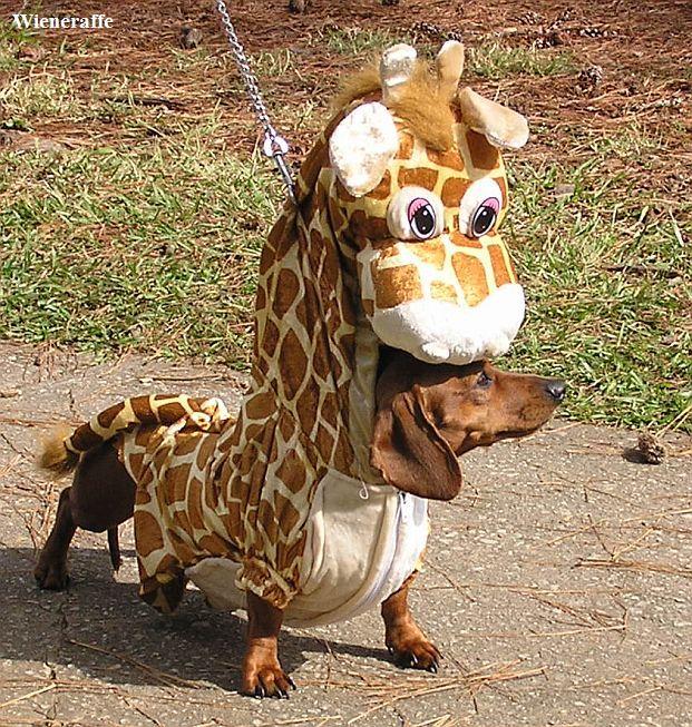 Giraffe dog - photo#10