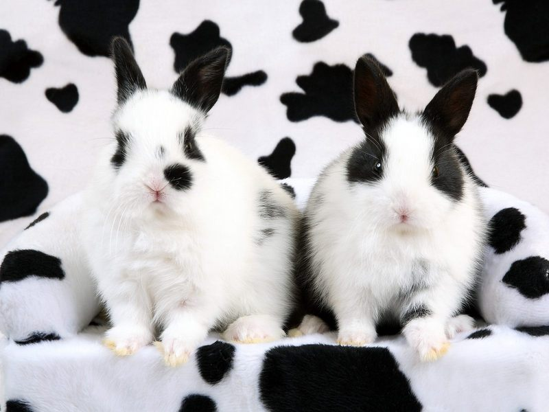 [Daily Photos] Spotted Rabbits; DISPLAY FULL IMAGE.