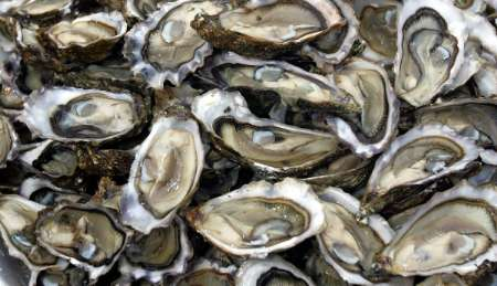 Oyster, France [REUTERS 2006-05-18]; Image ONLY