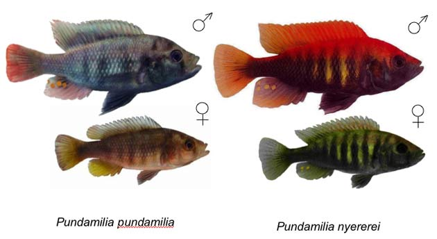 Fickle Female Fish Force Males to be Flashy [LiveScience 2006-05-19]; Image ONLY
