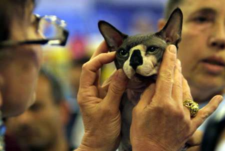 Sphinx Cat, Israel [REUTERS 2006-05-19]; Image ONLY
