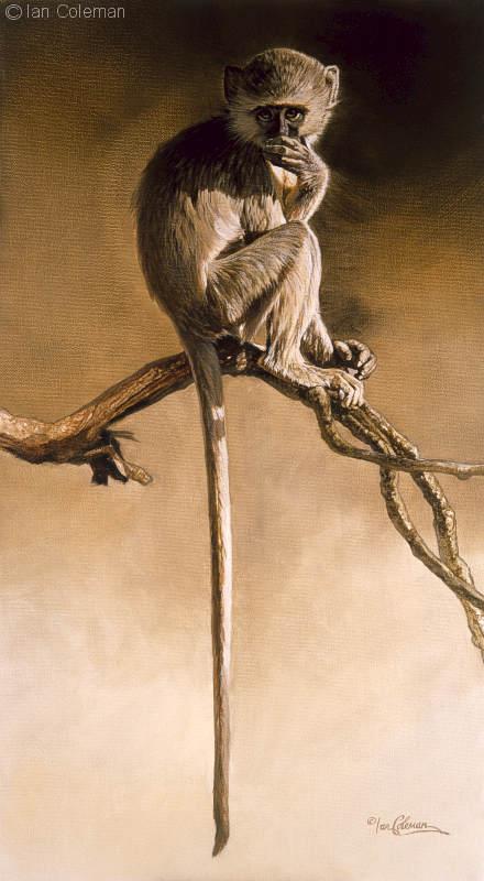 Ian Coleman Vervet Monkey Oops.jpg