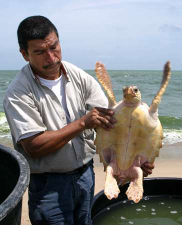 Turtle release, Colombia [REUTERS 2006-06-05]; Image ONLY