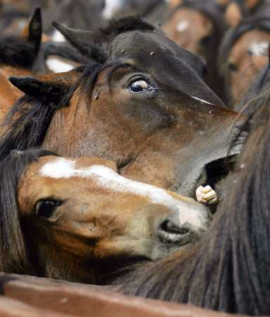 Horses, Spain [REUTERS 2006-06-11]; Image ONLY