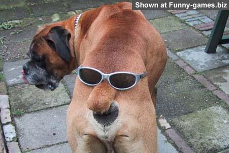 cooldog2.jpg