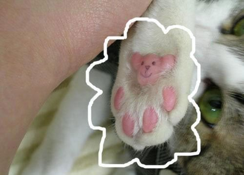 Cat foot.jpg