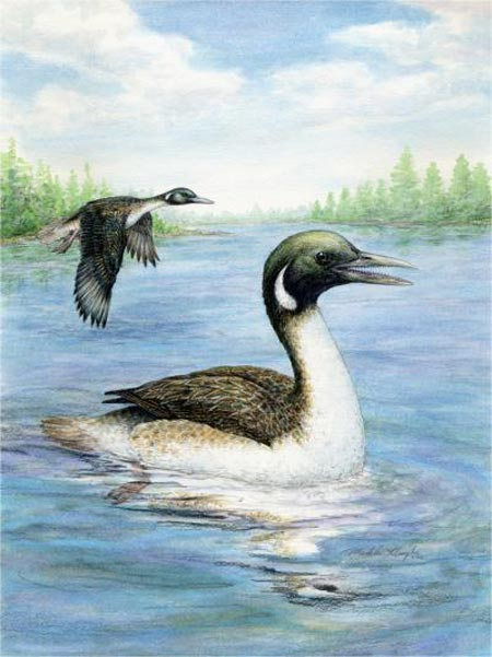 Early Bird Caught The Fish: Fossils Depict Aquatic Origins Of Birds 115 Million Years Ago [ScienceDaily 2006-06-15]; Image ONLY