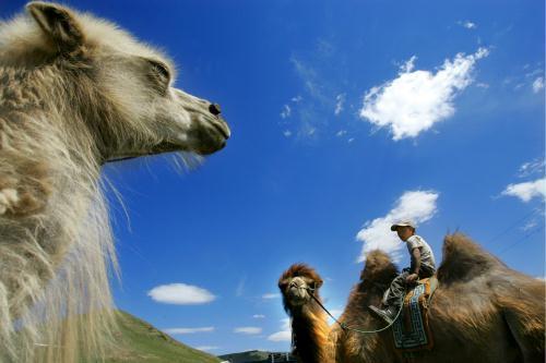 Camel Rider, Mongolia.jpg
