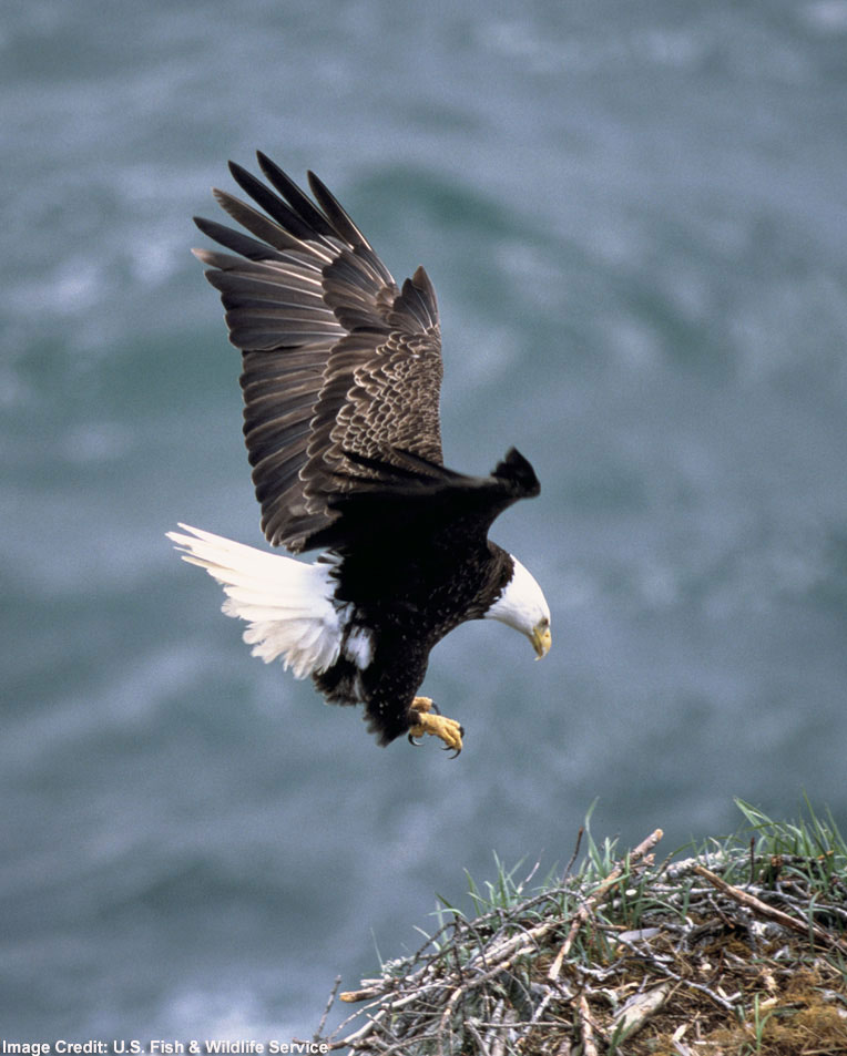 Eagle Chicks Allegedly Kill Sibling on Web Cam [LiveScience 2006-06-28]; Image ONLY