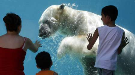 Polar Bear, USA [REUTERS 2006-08-02]; Image ONLY