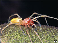 Austria gripped by fear of spider [BBC 2006-08-07]; Image ONLY