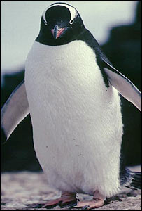 Penguins in Texas highway crash [BBC 2006-08-09]; Image ONLY