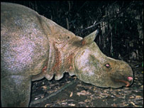 Baby boom for near-extinct rhino [BBC 2006-09-01]; Image ONLY