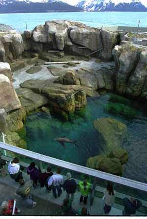 Sea Lion Video is Streaming and Steaming [LiveScience 2006-10-05]; Image ONLY