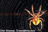 Spider Silk Could Repair Human Ligaments [LiveScience 2006-10-13]; Image ONLY