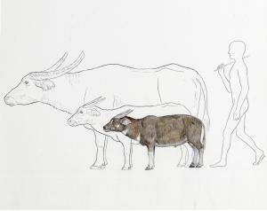 New Dwarf Buffalo Discovered By Chance In The Philippines [ScienceDaily 2006-10-23]; Image ONLY