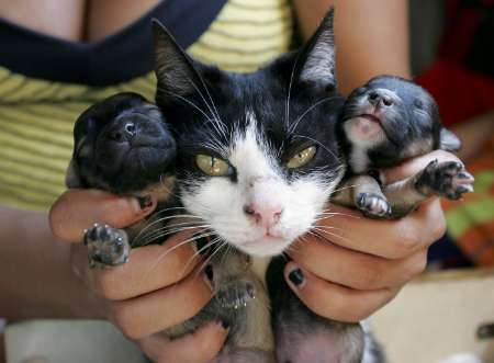 Doggy Kittens? Brazil [REUTERS 2006-11-15]; Image ONLY