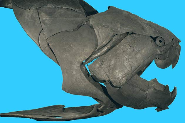 Prehistoric Fish Had Most Powerful Jaws [LiveScience 2006-11-28]; Image ONLY