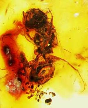 Two Studies On Bee Evolution Reveal Surprises [ScienceDaily 2006-12-14]; Image ONLY