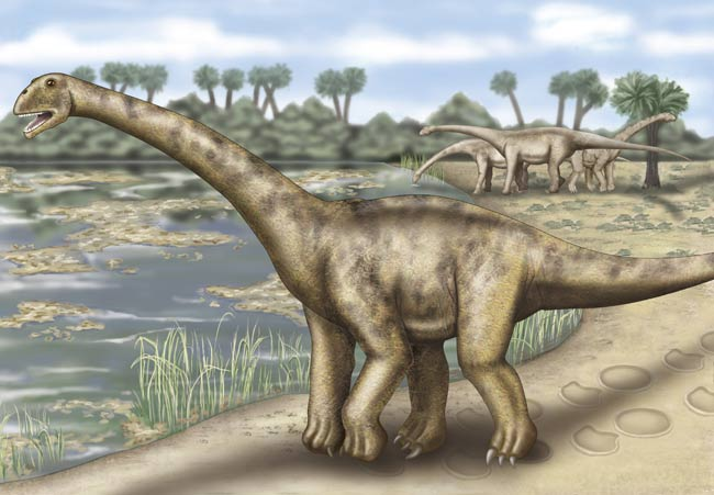 Largest European Dinosaur Found [LiveScience 2006-12-21]; Image ONLY