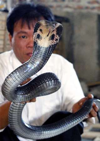 Copperhead Snake, Vietnam [REUTERS 2006-12-22]; Image ONLY