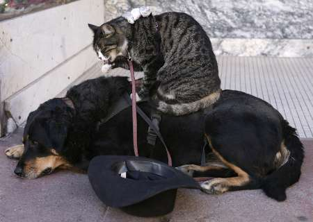 Mice on Cat on Dog, USA [REUTERS 2006-12-25]; Image ONLY