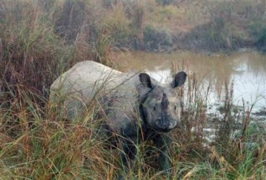 Great One-horned Rhinoceros, Nepal [REUTERS 2007-01-03]; Image ONLY