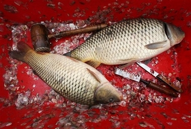 Common Carps, Serbia [AP 2007-01-06]; Image ONLY