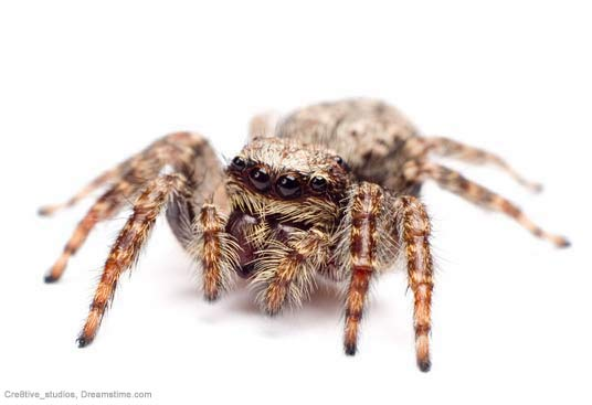 Killer Spiders Prefer Malaria Mosquitoes [LiveScience 2007-01-12]; Image ONLY