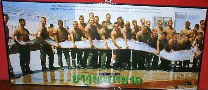 Giant Oarfish Caught off the Coast of California!; Image ONLY