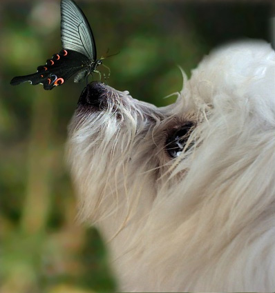 Dog and Butterfly.jpg