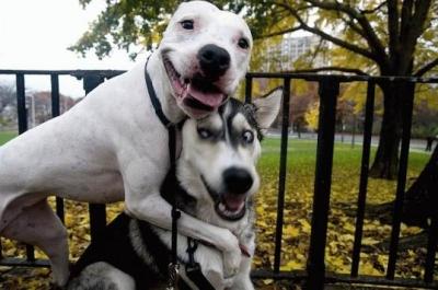 funny dogs.jpg