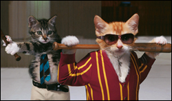 bat cats.jpg
