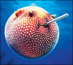ball (pufferfish).jpg