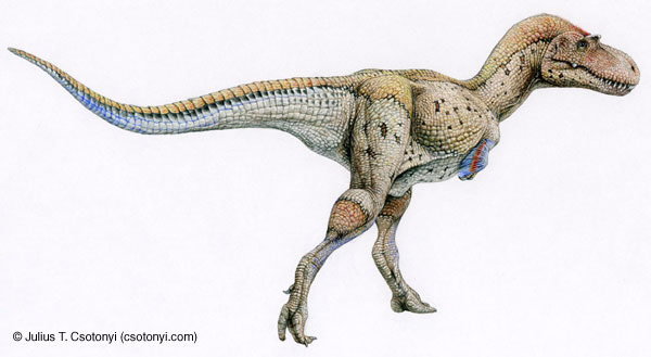 How Old Were the Oldest Dinosaurs? [LiveScience 2007-12-05]; Image ONLY