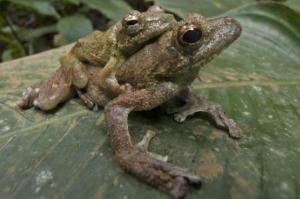 New, Rare And Threatened Species Discovered In Ghana [ScienceDaily 2007-12-15]; Image ONLY