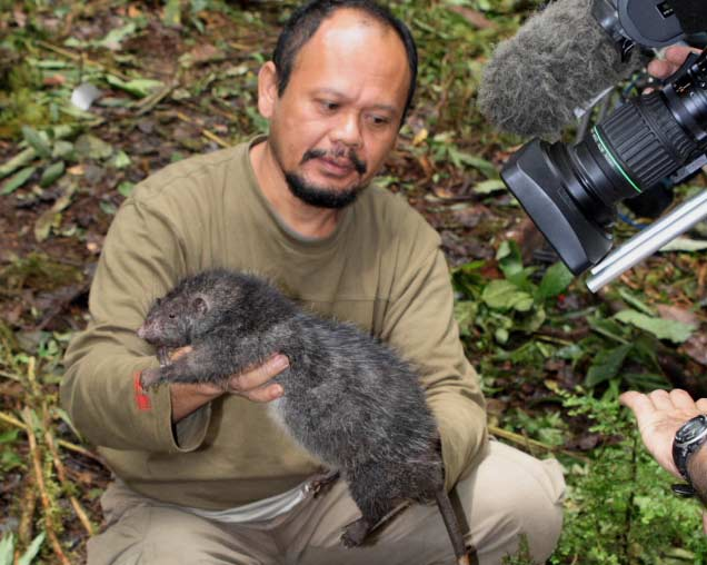 Giant Rat Discovered in Indonesia Jungle [LiveScience 2007-12-17]; Image ONLY