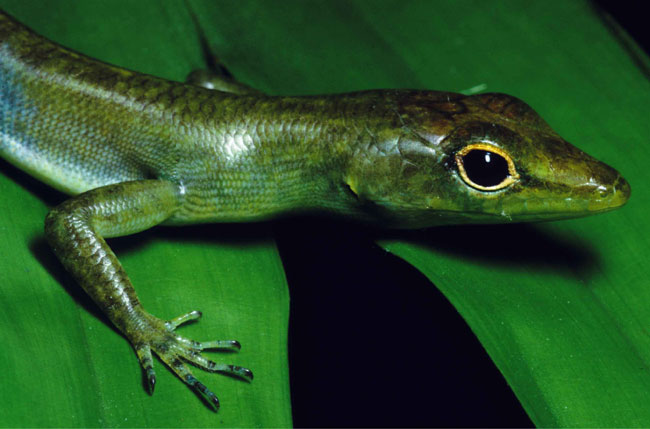 New Species Found in Mysteriously Diverse Jungle [LiveScience 2007-12-21]; Image ONLY