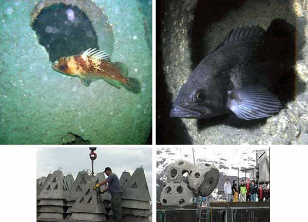 Concern Lingers on Success of Artificial Reefs [LiveScience 2007-12-27]; Image ONLY