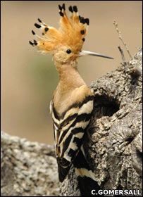 Big changes ahead for Britain's birds [BBC 2008-01-15]; Image ONLY