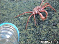 Warming risks Antarctic sea life [BBC 2008-02-16]; Image ONLY