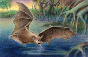 Giant Fossil Bats Out Of Africa, 35 Million Years Old [ScienceDaily 2008-03-05]; Image ONLY