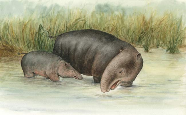Ancient Elephants Loved Water [LivesScience 2008-04-14]; Image ONLY