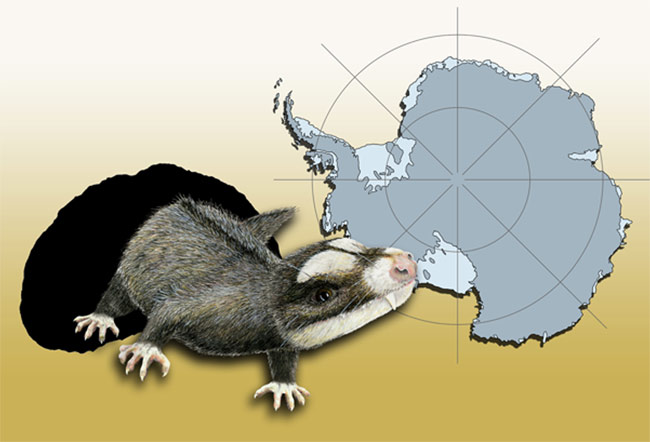 New Fossils Suggest Ancient Cat-sized Reptiles in Antarctica [LiveScience 2008-06-07]; Image ONLY