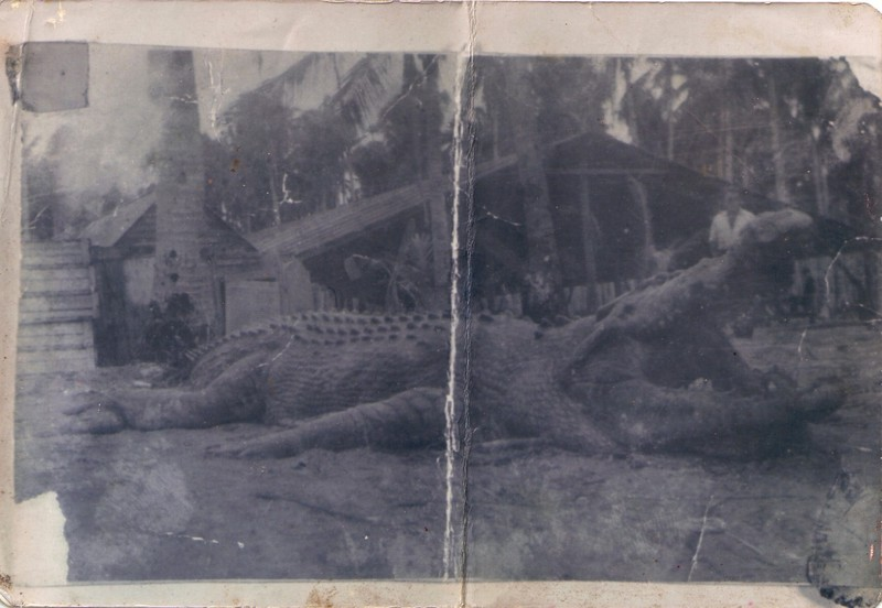 30 Ft Crocodile http://animal.memozee.com/view.php?tid=2&did=30122